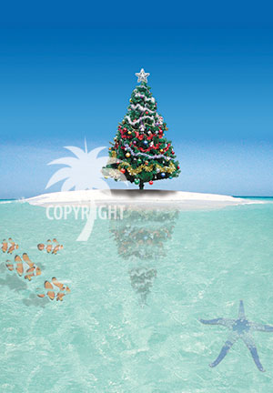 christmas great barrier reef