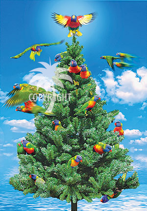 tropical parrots christmas