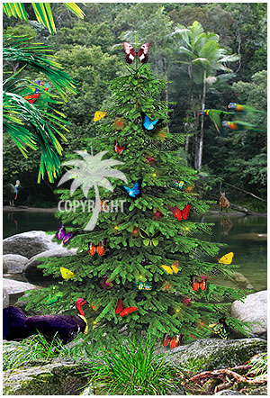 christmas butterflies rainforest