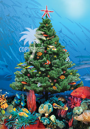 christmas on Great Barrier Reef